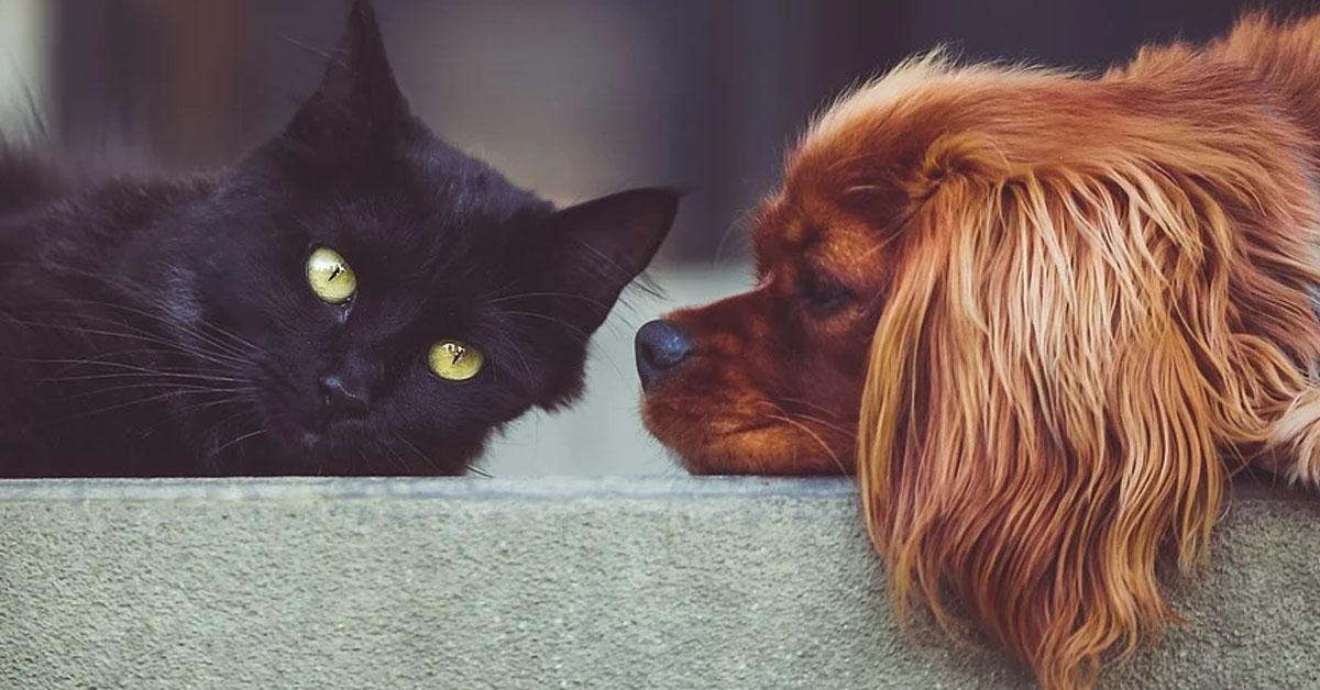 Gatto con un cane