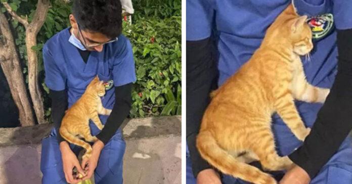 Gatto che consola un infermiere