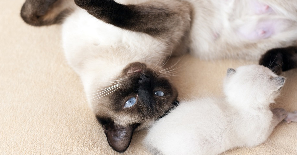 Gattino sdraiato sulla schiena