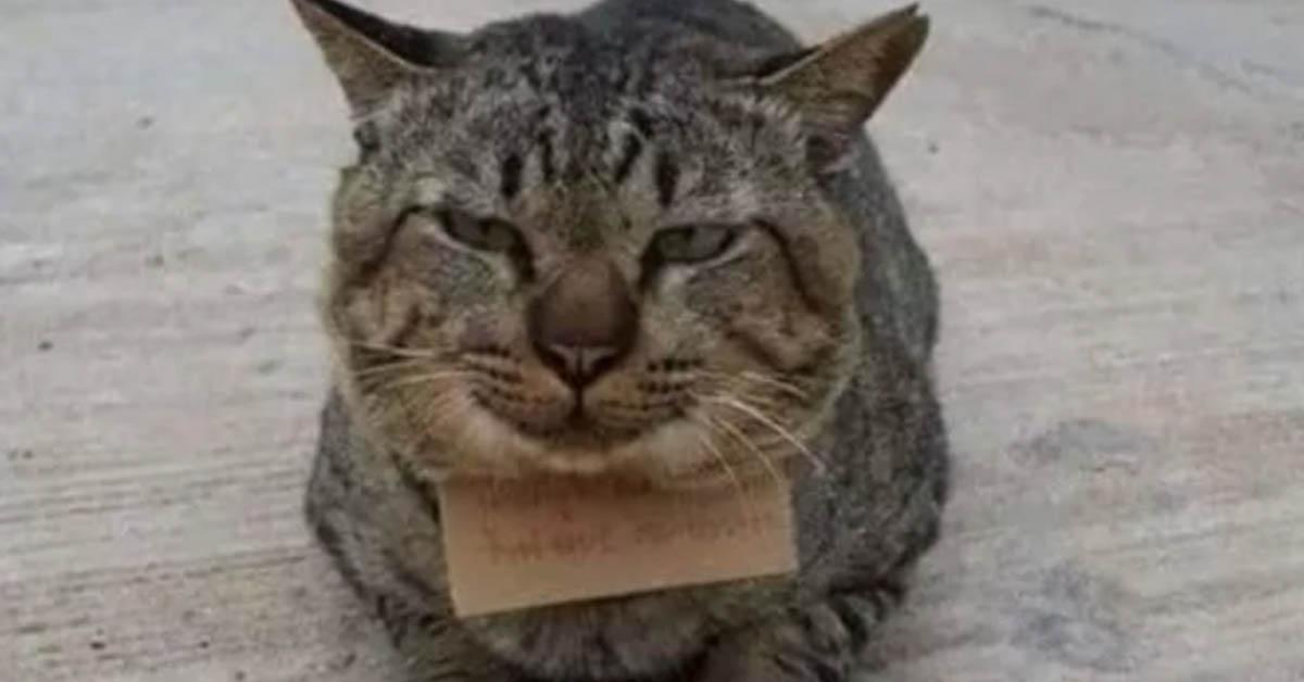 Gatto tigrato con un bigliettino al collo