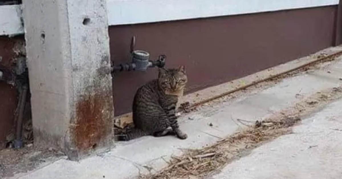 Gatto tigrato randagio