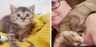 salvataggio gattino soriano