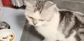 video gattino Li Bai