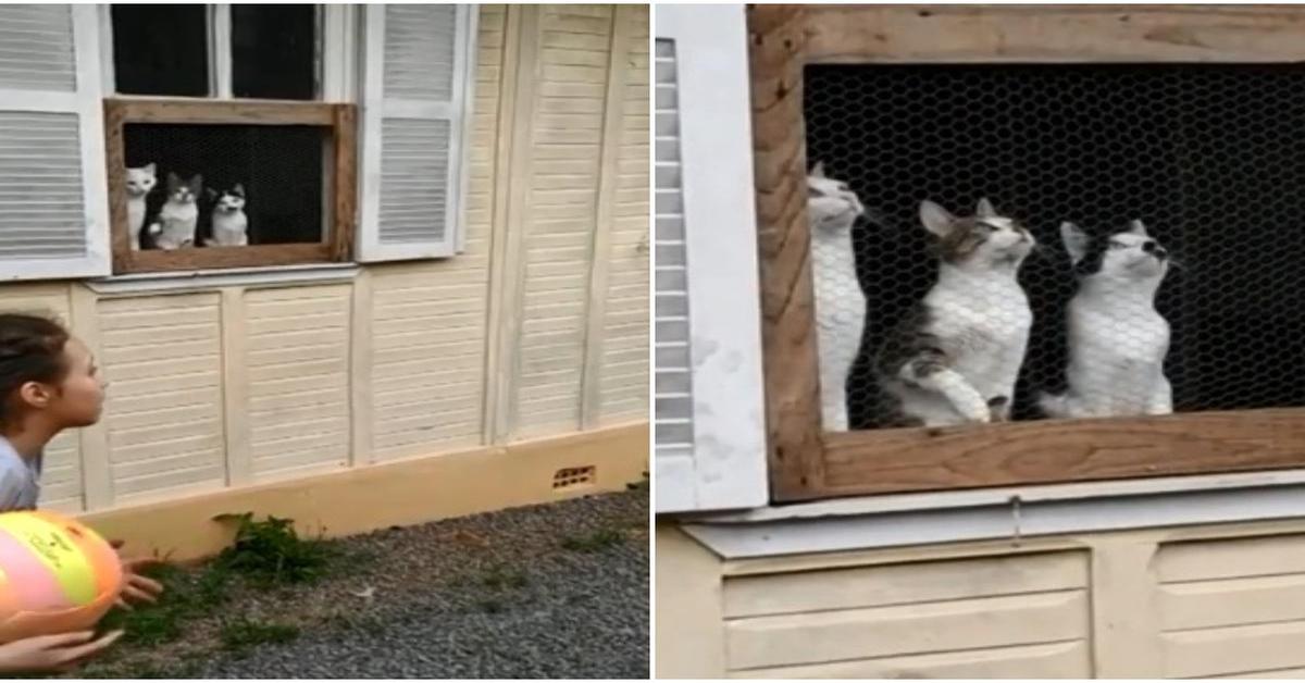tre gatti curiosi che guardano la palla