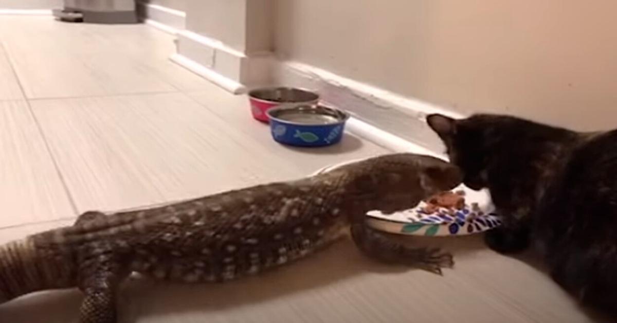 gatta e lucertolone amici