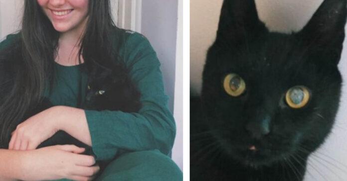Gatto nero in braccio alla proprietaria