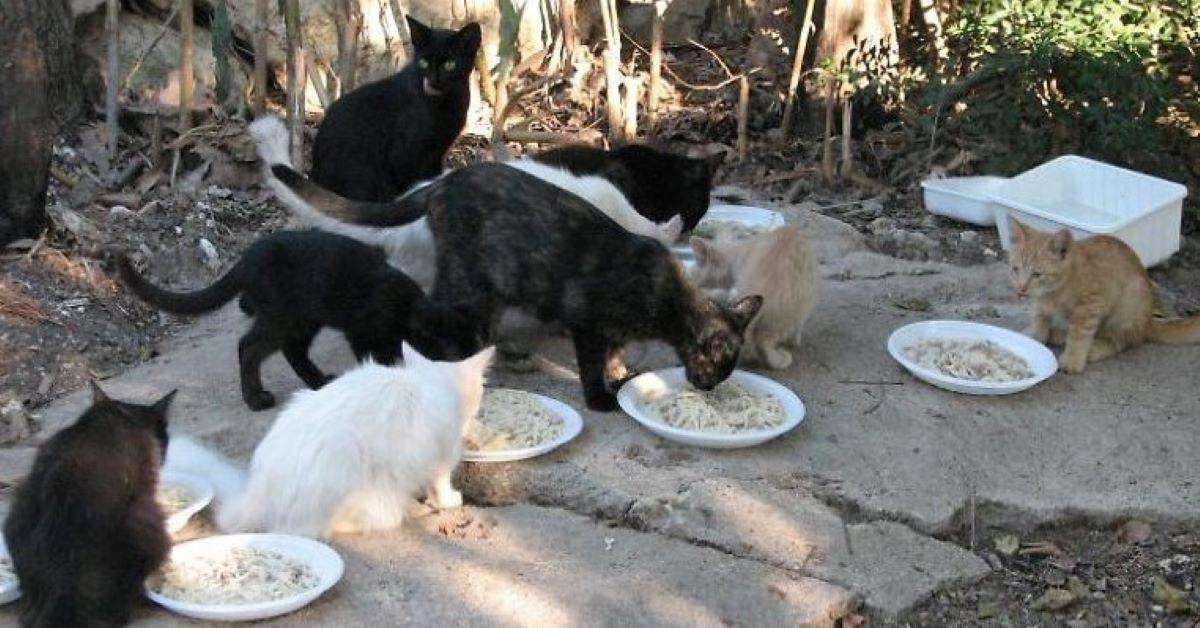 nutrire un gatto randagio