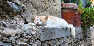 Perché i gatti si allontanano quando stanno per morire?