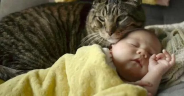 neonata e gatto grigio