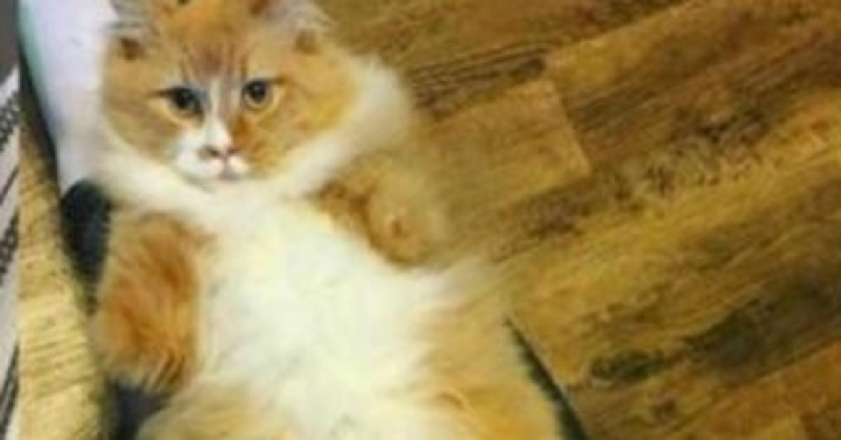 gattino senza zampe anteriori sdraiato