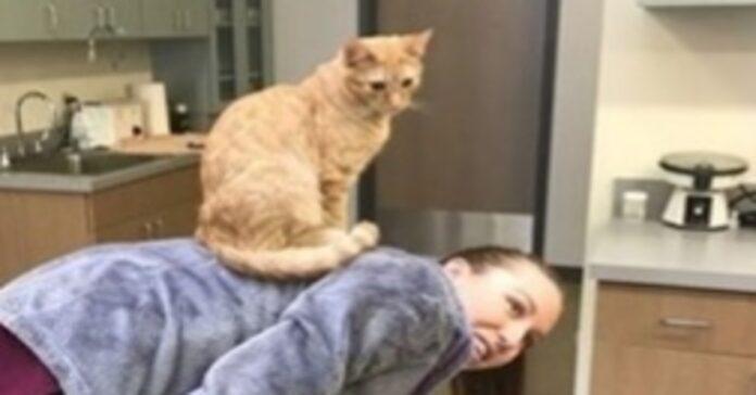 video gattino infermiere