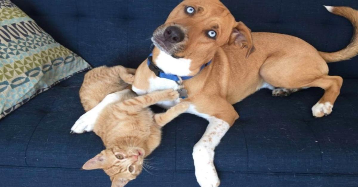 gattino gioca con il cane