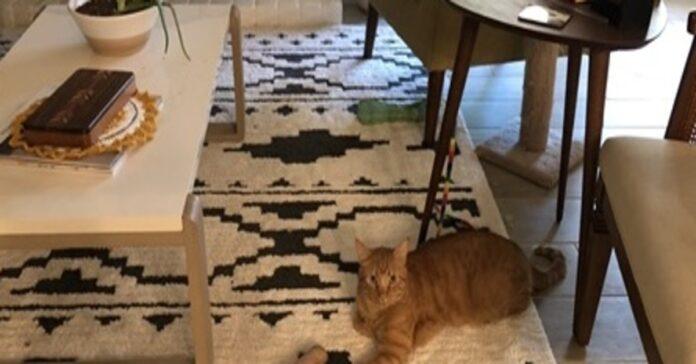 gattino illusione ottica