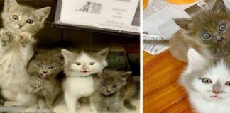 cinque gattini trovati e salvati