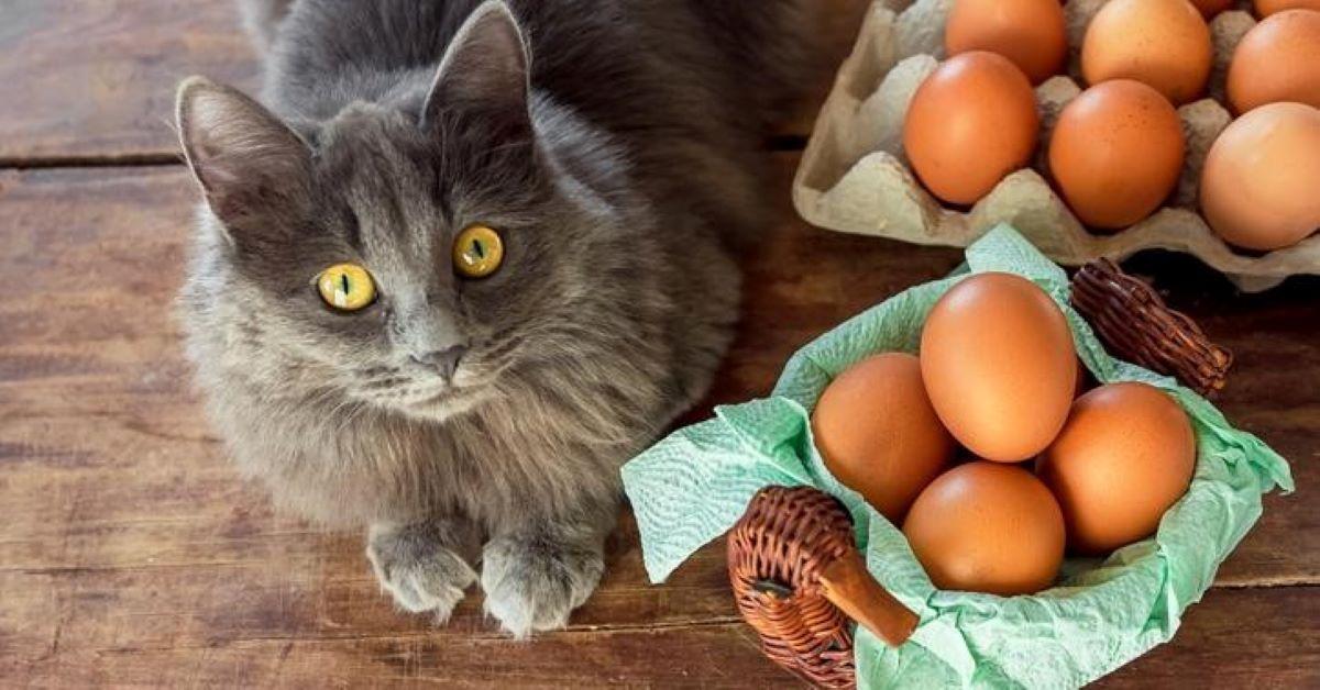cibi umani sicuri per i gatti