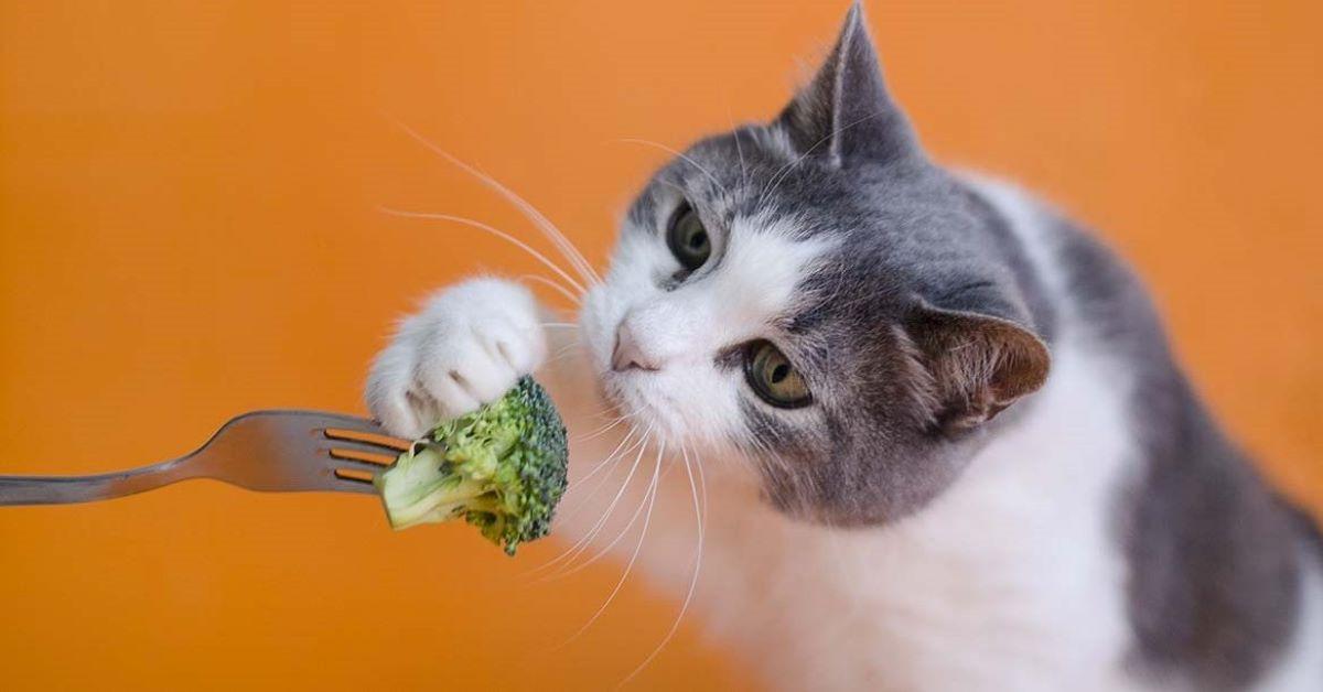 gatto mangia broccolo