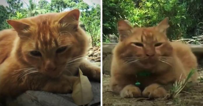 nana gatta visita tomba padrone