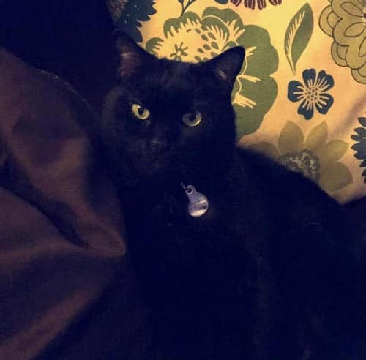 artemis gattino famiglia denuncia scomparsa