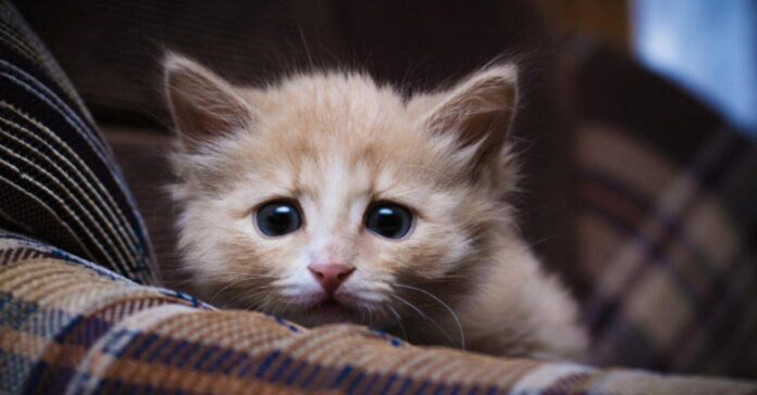 gattino intimorito