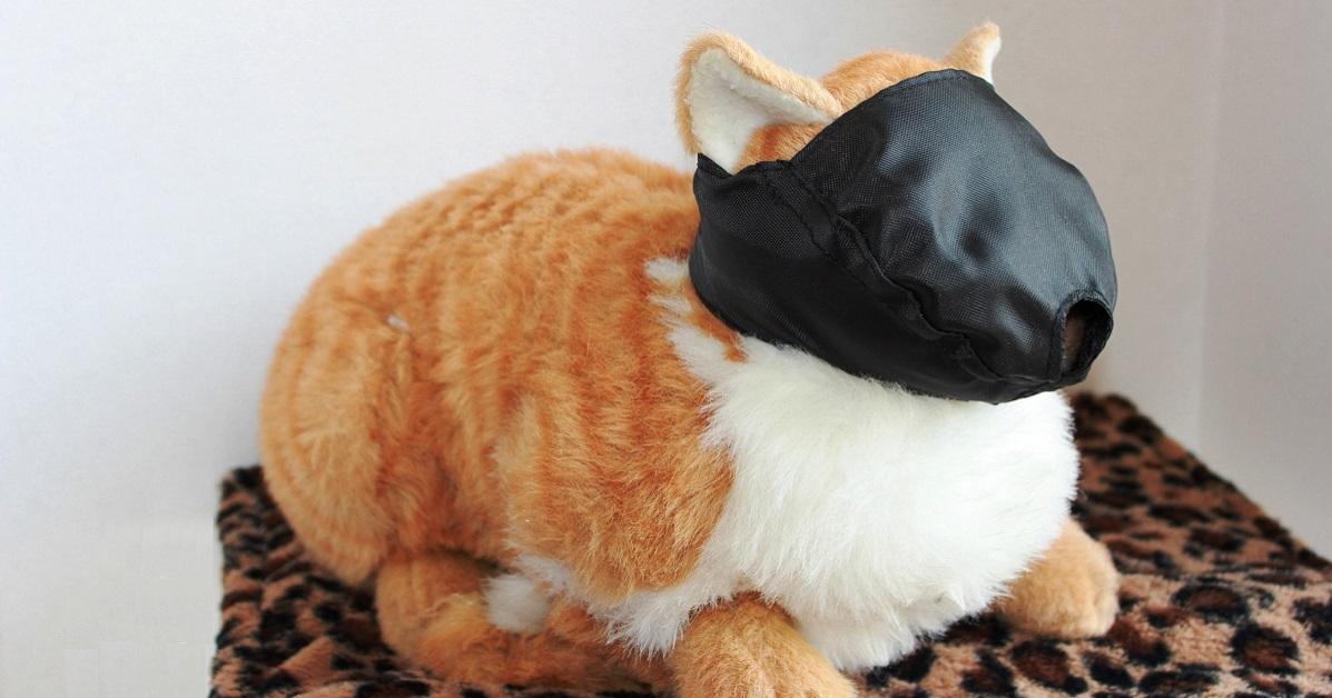 gatto con museruola nera