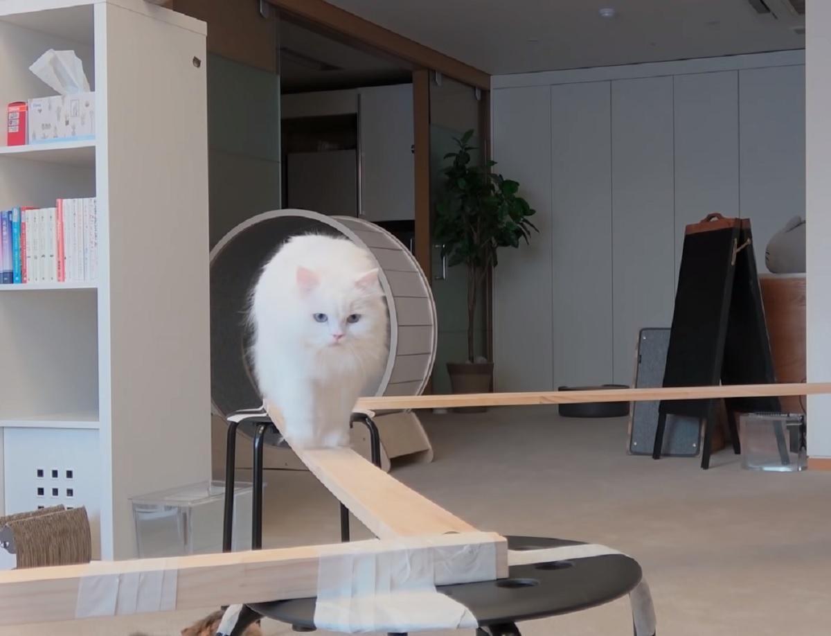 gattini sfida ponte di legno