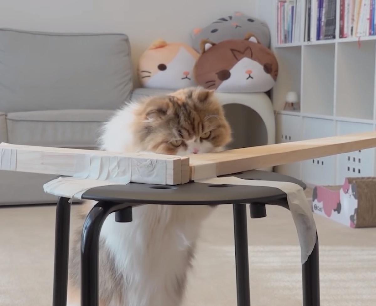 gattini bravura ponte di legno