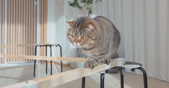 gattini percorrono ponte in legno realizzato casa