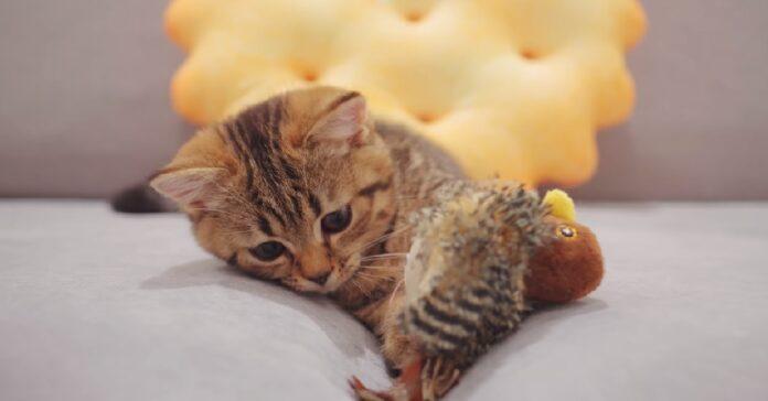 gattini scambiano uccello per loro figlio e lo accudiscono video
