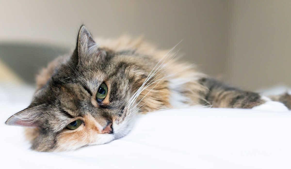 gatto che dorme sul letto