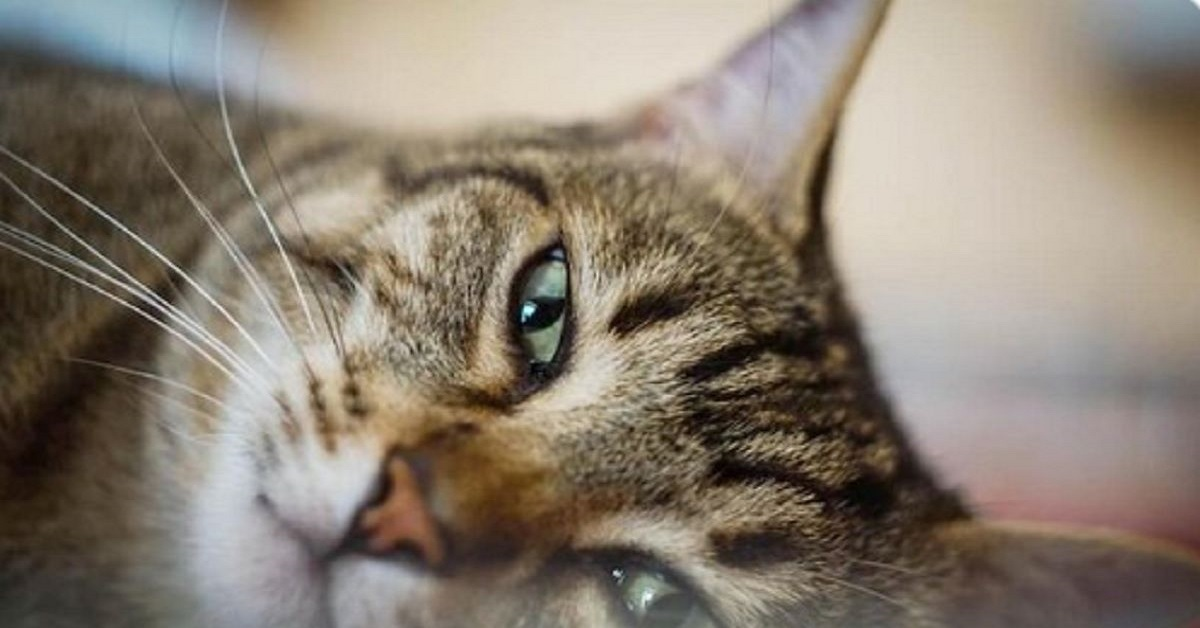 gatto su un fianco