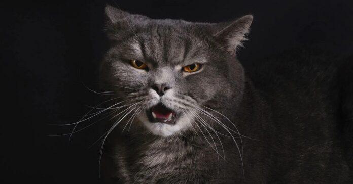 gatto che protesta