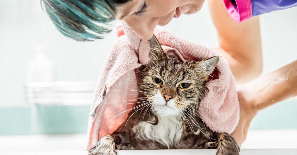 gatto che non ama il bagno