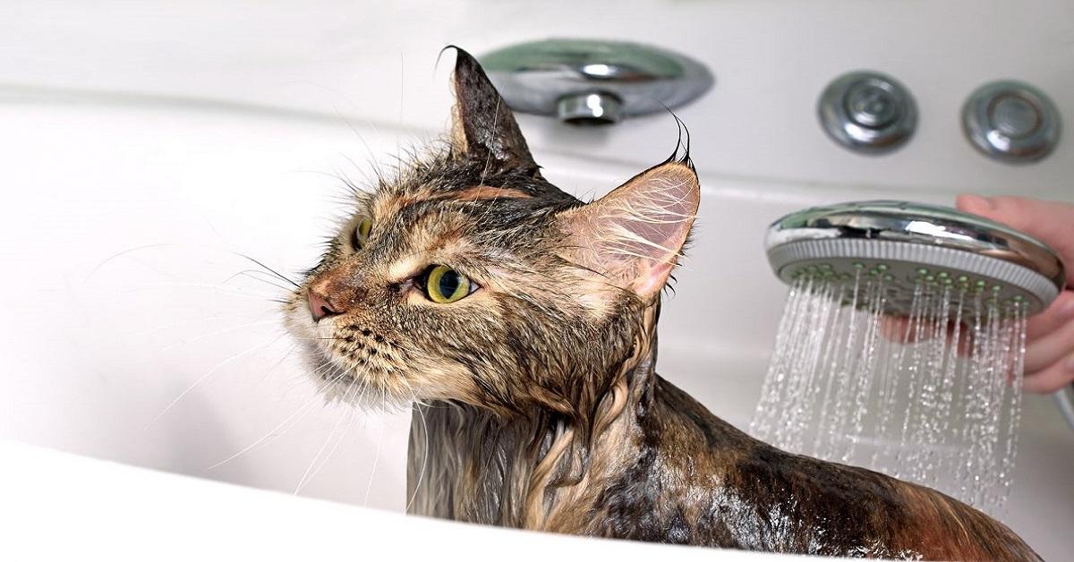 gatto sotto l'acqua