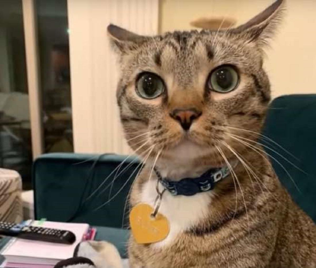bambi gattina non troppo socievole