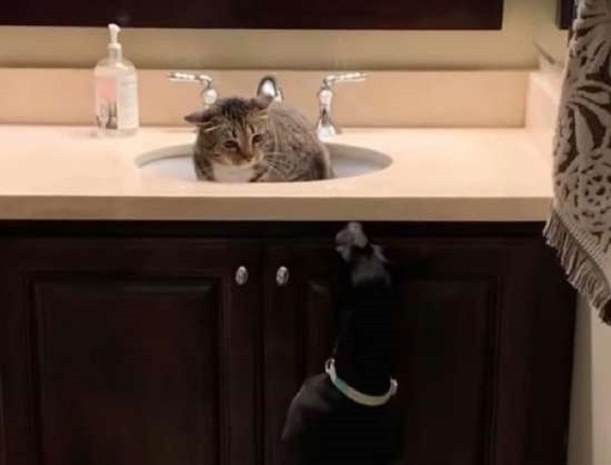 bambi gattina nascosta lavandino