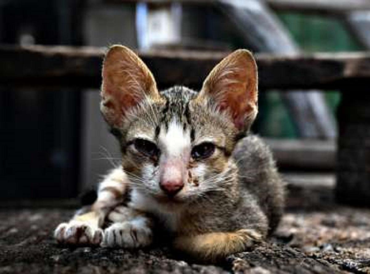 beatrix gattina disperata cerca cibo