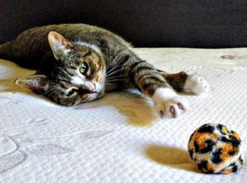 beatrix gattina ignorata passanti
