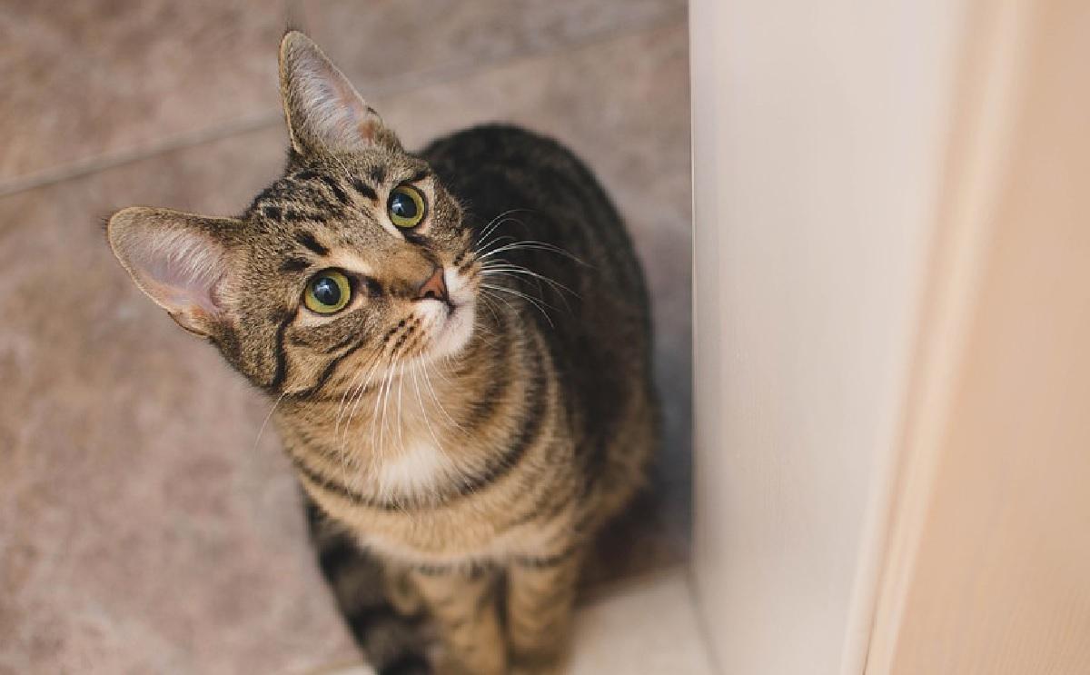 beatrix gattina programma assistenza cibo