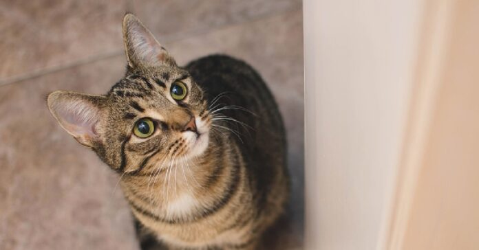 beatrix gattina soriano vaga parcheggio cerca cibo