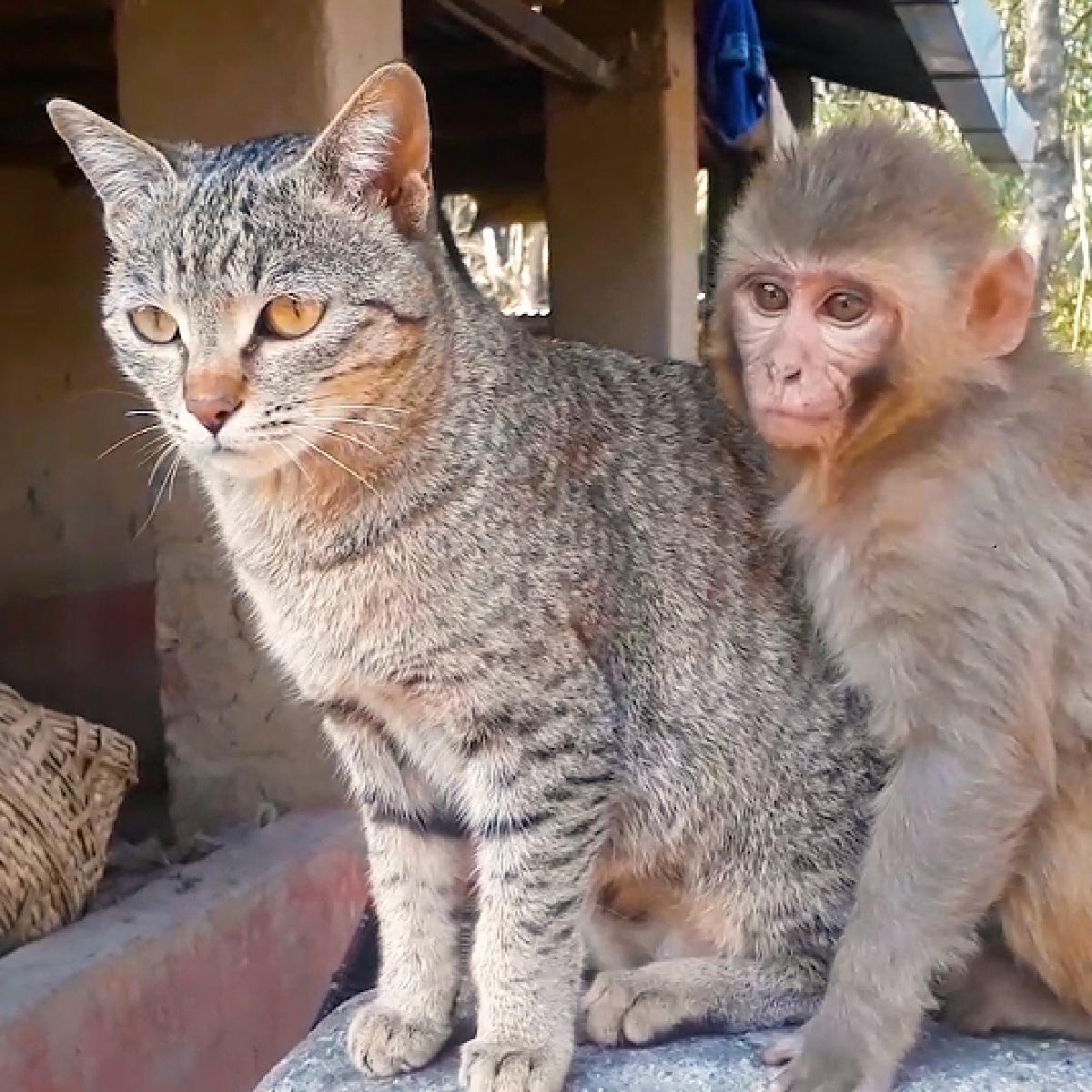 scimmietta gattina amica stretta