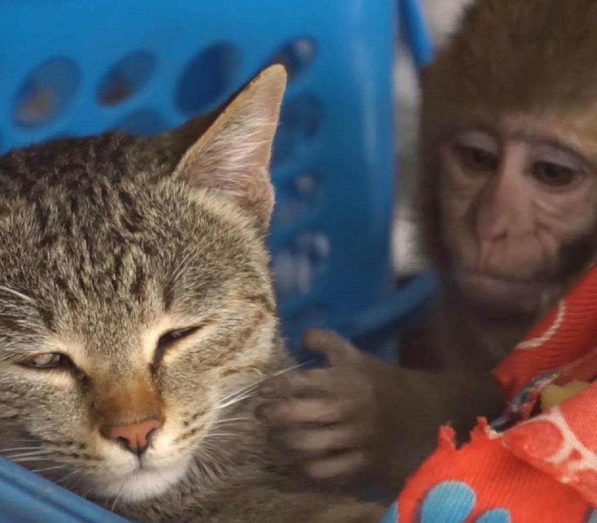 billo gatta conoscenza scimmia