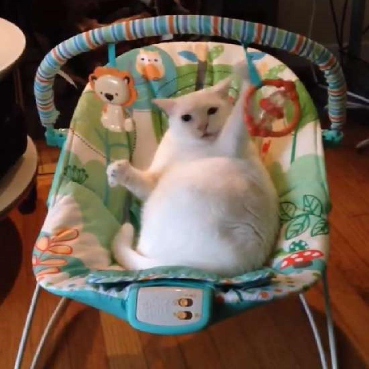 blanquita gatta divertimento assicurato