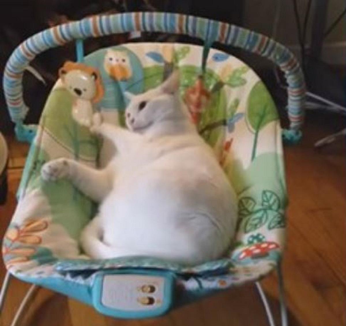 blanquita gattina carpe diem
