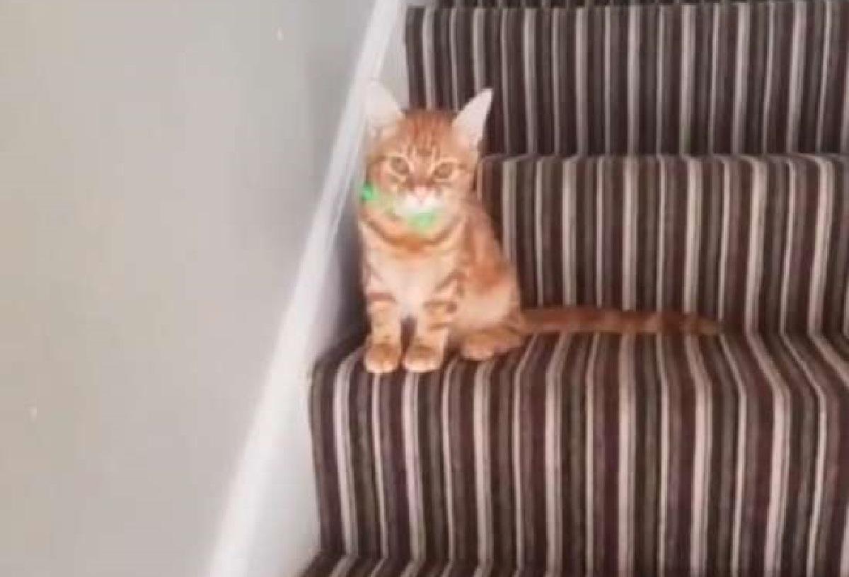 boudicca gatta adozione famiglia