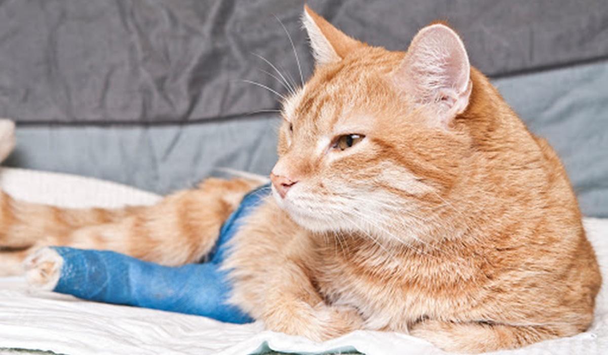 gatto con la zampa rotta