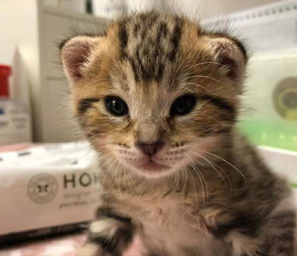 burberry gattina trovata san jose