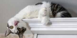 gattino vuole dormire in alto