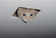 gatto intrappolato