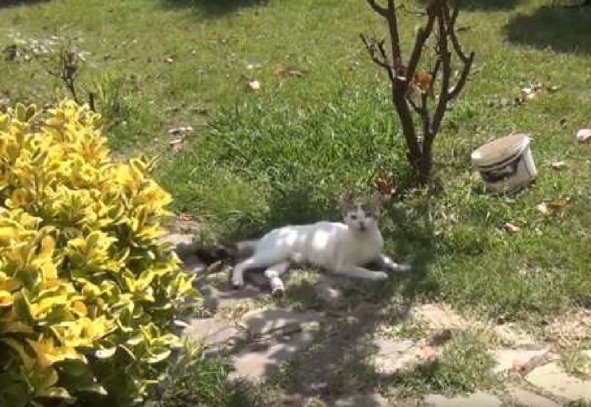 chery gatta si nasconde giardino