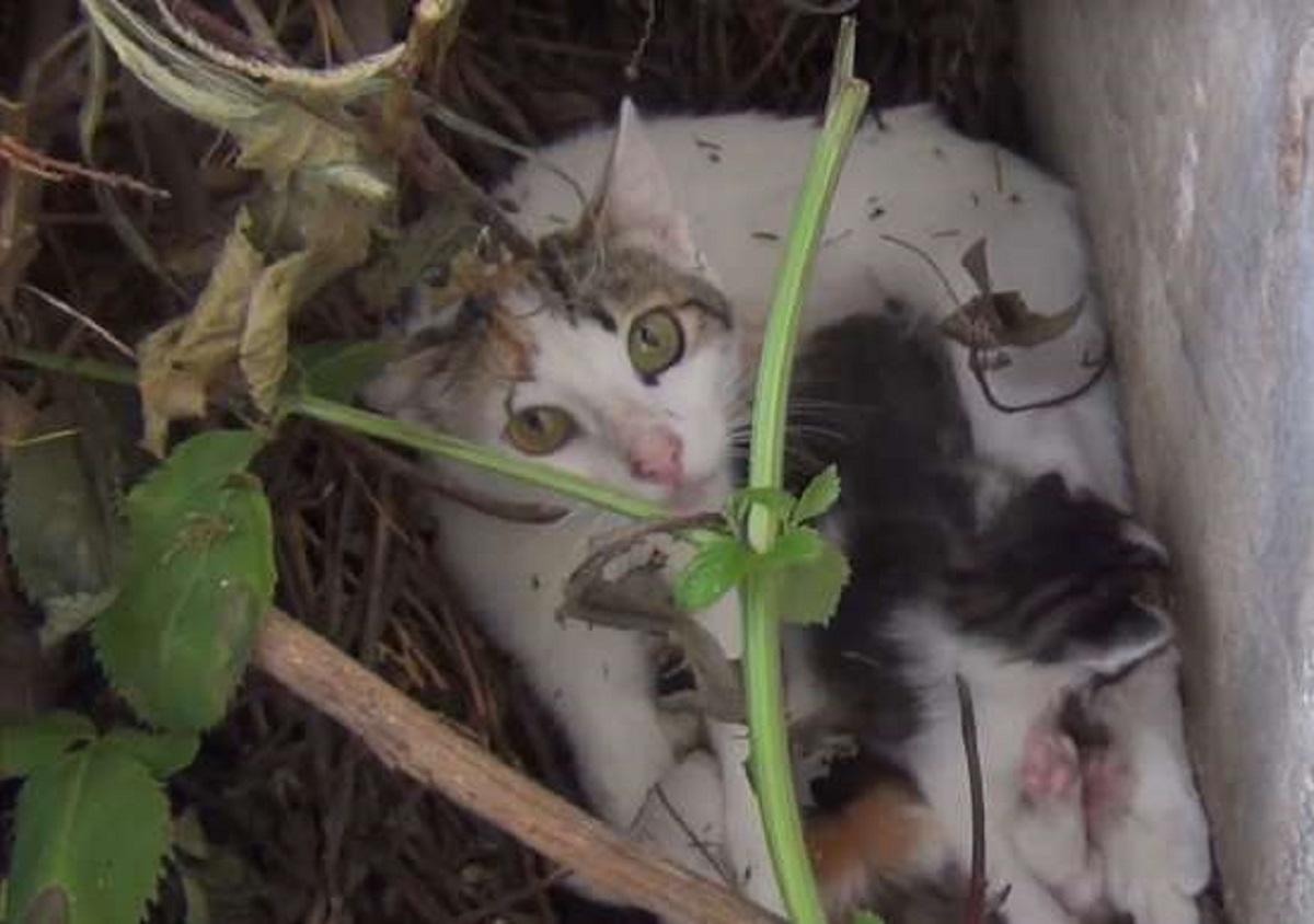 chery gatta nasconde piccoli cespuglio